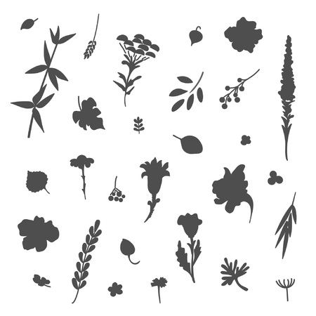 Collection of flowers and plants. Used for various types of design. Vector illustration