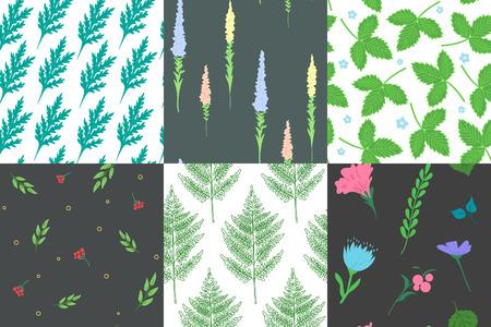 Set of stylish seamless patterns. Herb and flower. Background used for different types of design. Vector illustration Векторная Иллюстрация