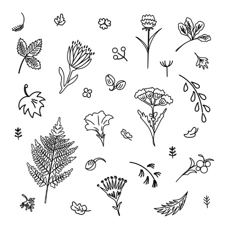 Collection of flowers and plants. Used for various types of design. Linear style. Vector illustration Illustration