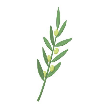 Green olive branch vector. Symbol of Greece. Eco food. Greek cuisine