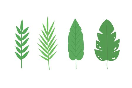 Set of large tropical leaves. Great for the background. 스톡 콘텐츠 - 146106984