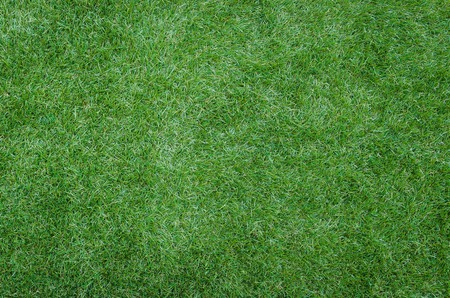 green grass texture as background image photo