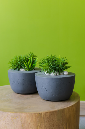 plants in modern pot on wooden table with green painted wall Stockfoto
