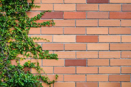 ladrillo textura de la pared con las plantas como imagen de fondo