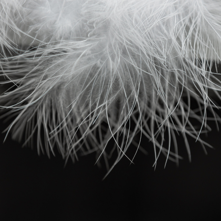 close up of white fur on black background