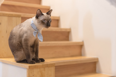 cutouts: cute cat sitting on wooden floor with stair