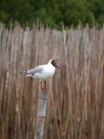 Bird  standing on the bamboo In the summer. photo