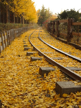 Leaves on the rails.in  nami island  ,South Korea II Stock Photo - 11785486