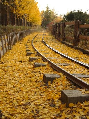 Leaves on the rails.in  nami island  ,South Korea II photo
