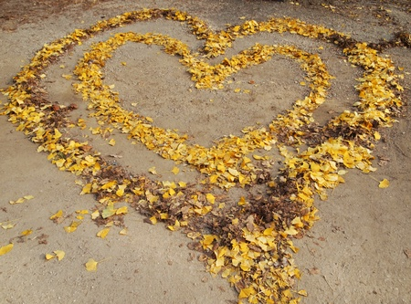 Leaves of love On the ground  photo