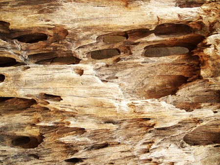 Patterned wood Stock Photo - 13152855