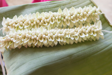 White garlands placed on the floor of banana leaves. photo