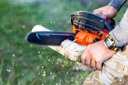 man with gasoline powered chainsaw cutting fire wood from tree in forest