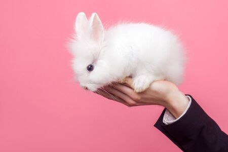 Male hand holding adorable white fluffy rabbit, cute bunny with black eyes, concept of people and pet care, love for domestic animals, pet adoption. indoor studio shot isolated on pink background