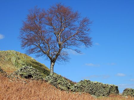 Tree and dry stone wall on the Rigg Stock Photo - 667457
