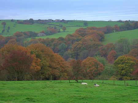 langdale: Autumn scene in the forest of Bowland, near Lancaster, Lancashire, England