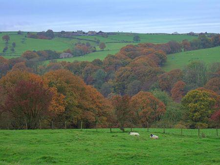 Jesień scena w lesie z Bowland koło Lancaster, Lancashire, Anglia