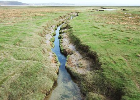Salt marsh creek Stock Photo - 682408