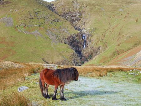 Howgill pony and Cautley Spout photo