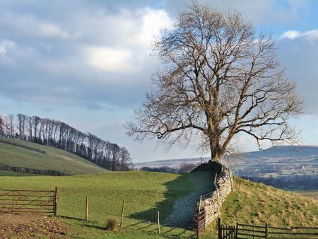 Winter tree in Swaledale Stock Photo - 777268