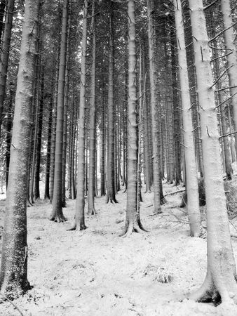 Snow covered trunks Stock Photo - 903140