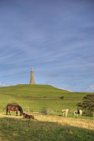 bluer: Five Horses on Hoad Hill, near Ulverston, Cumbria, England. The Hoad monument can be seen in the background and fine Cirrus clouds fill the sky