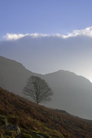 receding: An isolated winter tree on a mountain slope with a more distant hill in the background