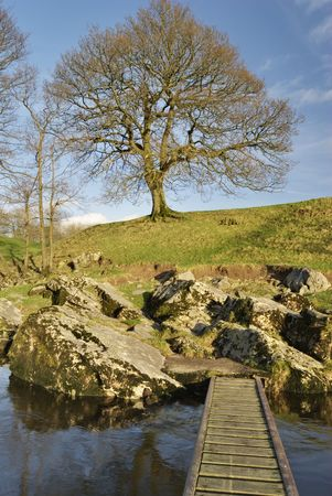 lonsdale: An isolated tree on thr bank of the river Lune near Kirkby Lonsdale, Cumbria, UK