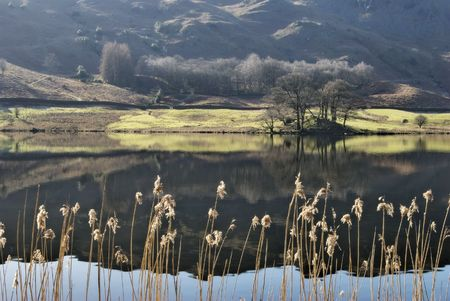 lake district england: Reeds on the shore of Rydal Water in the English Lake District