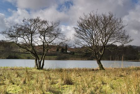 Two trees on the shore of Loughrigg Tarn in the English lake District Stock Photo - 2773563