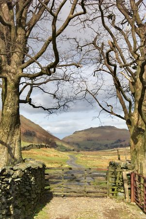 bordered: An English lake District farm gate bordered by two treees in Winter