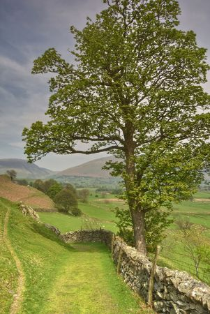 drystone: A solitary tree beside a dry stone wall on a footpath in the English Lake District Stock Photo