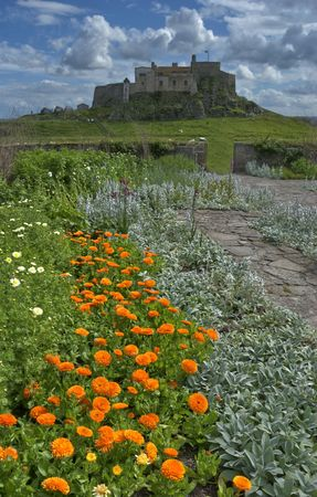 walled: Marigolds in the walled garden at Lindisfarne Castle on Holy Island, Northumberland, England Stock Photo