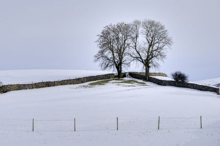 drystone: A Winter scene of two trees in the corner of a field bounded by two drystone walls and a barbed wire fence