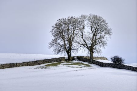 drystone: A Winter scene of two trees in the corner of a field bounded by two drystone walls Stock Photo