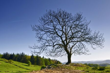 Scenic view of bare tree in countryside, Lake District National Park, Cumbria, England. Stock Photo - 4974398