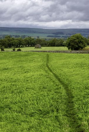 A path worn in the grass across a green pasture.