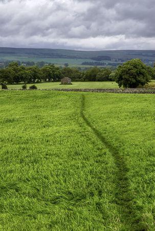 wensleydale: Un camino lleva en la hierba en un prado verde.