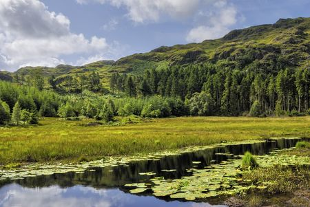 fells: Scenic view of Harrop Tarn with forest in background, Wythburn Fells, Lake District National Park, Cumbria, England.