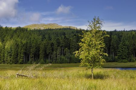 Closeup of tree with forest in background Harrop Tarn, Lake District National Park, Cumbria, England. Stock Photo - 5929682