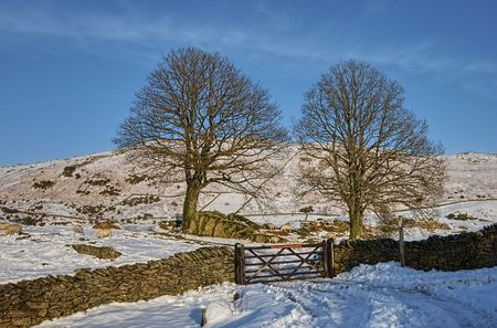 Scenic view of dry stone wall and tree in Wintry landscape with blue sky background, Lake District National Park, Cumbria. Stock Photo - 6618017
