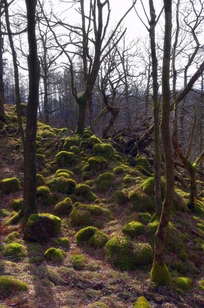 branched: Scenic view of moss covered rocks in forest with bare branched trees.