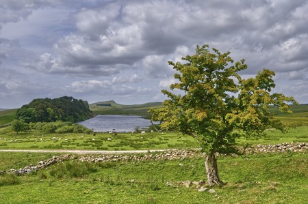 lough: An isolated tree overlooking Crag Lough alongside Hadrians wall, Northumbria, Northern England
