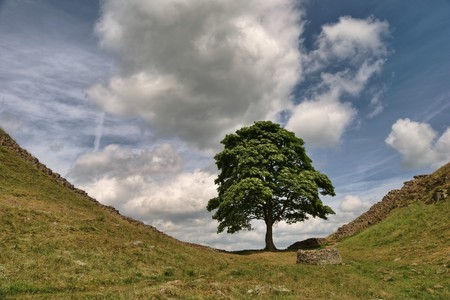 Sycamore Gap on Hadrian's wall in the Northumberland National Park 免版税图像
