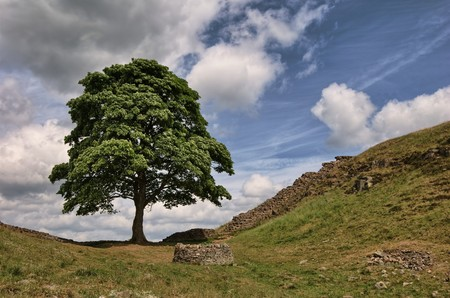 Sycamore Gap on Hadrians wall in the Northumberland National Park