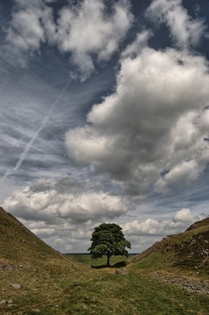 Sycamore Gap on Hadrians wall in the Northumberland National Park photo