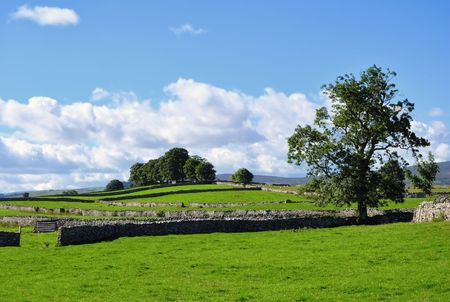 drystone: Summer fields & drystone walls near Shap, Cumbria, England
