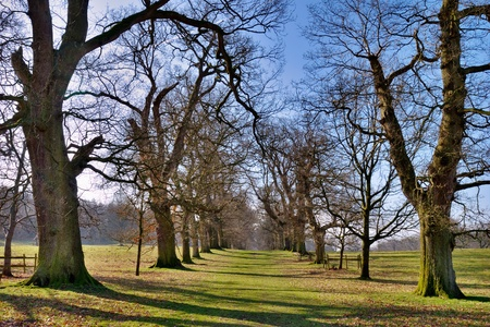branched: Scenic view of bare branched tree forming avenue in green countryside park with blue sky background.