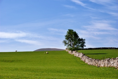 lonsdale: A simple rural scene near Kirkby Lonsdale, Cumbia, England