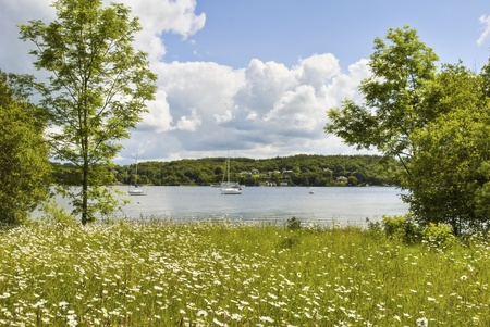Daisies in a meadow on the shore of Windermere  in the English Lake District National Park Stock Photo - 9796431